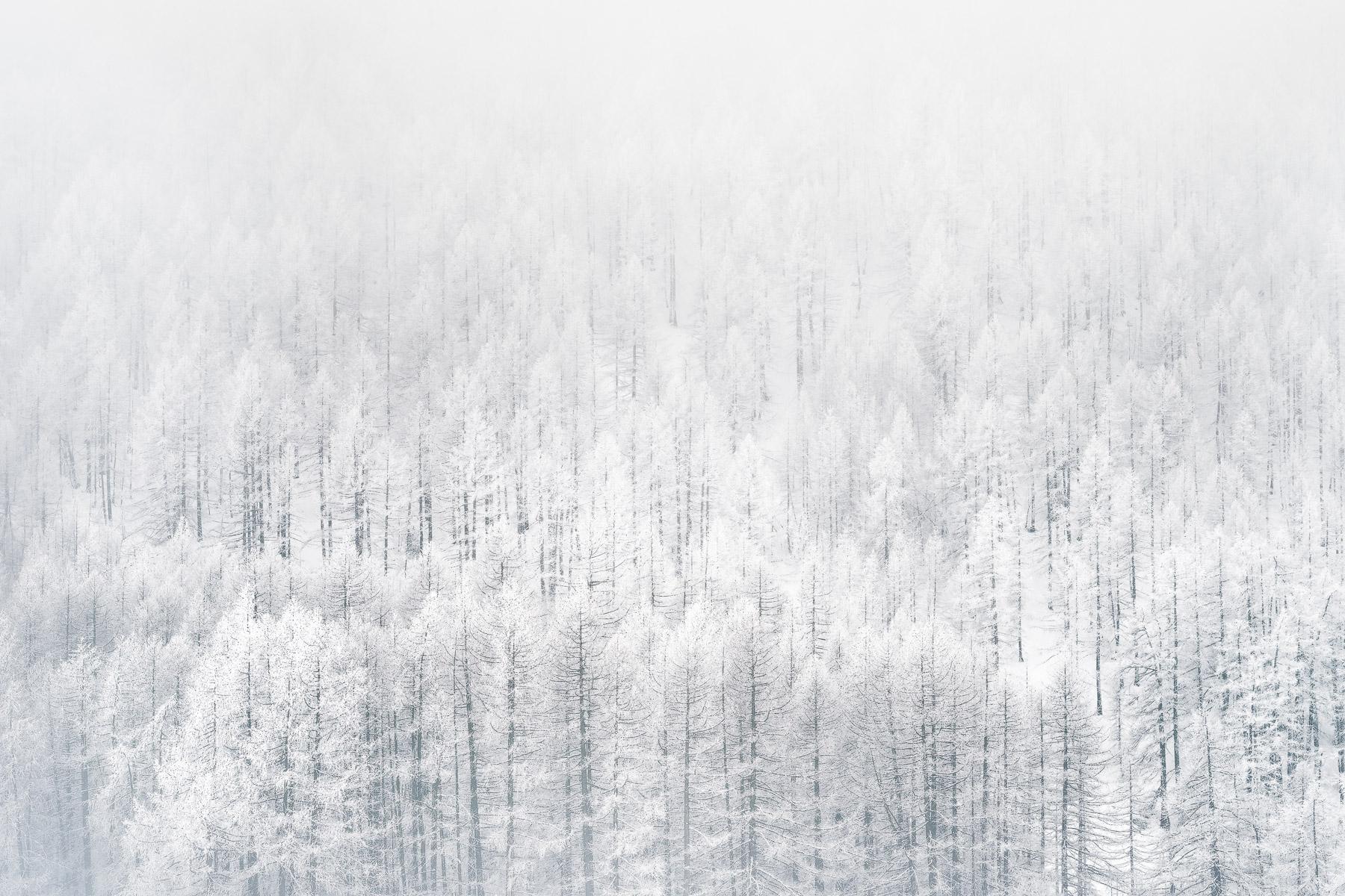 inverno-alberi-chianale