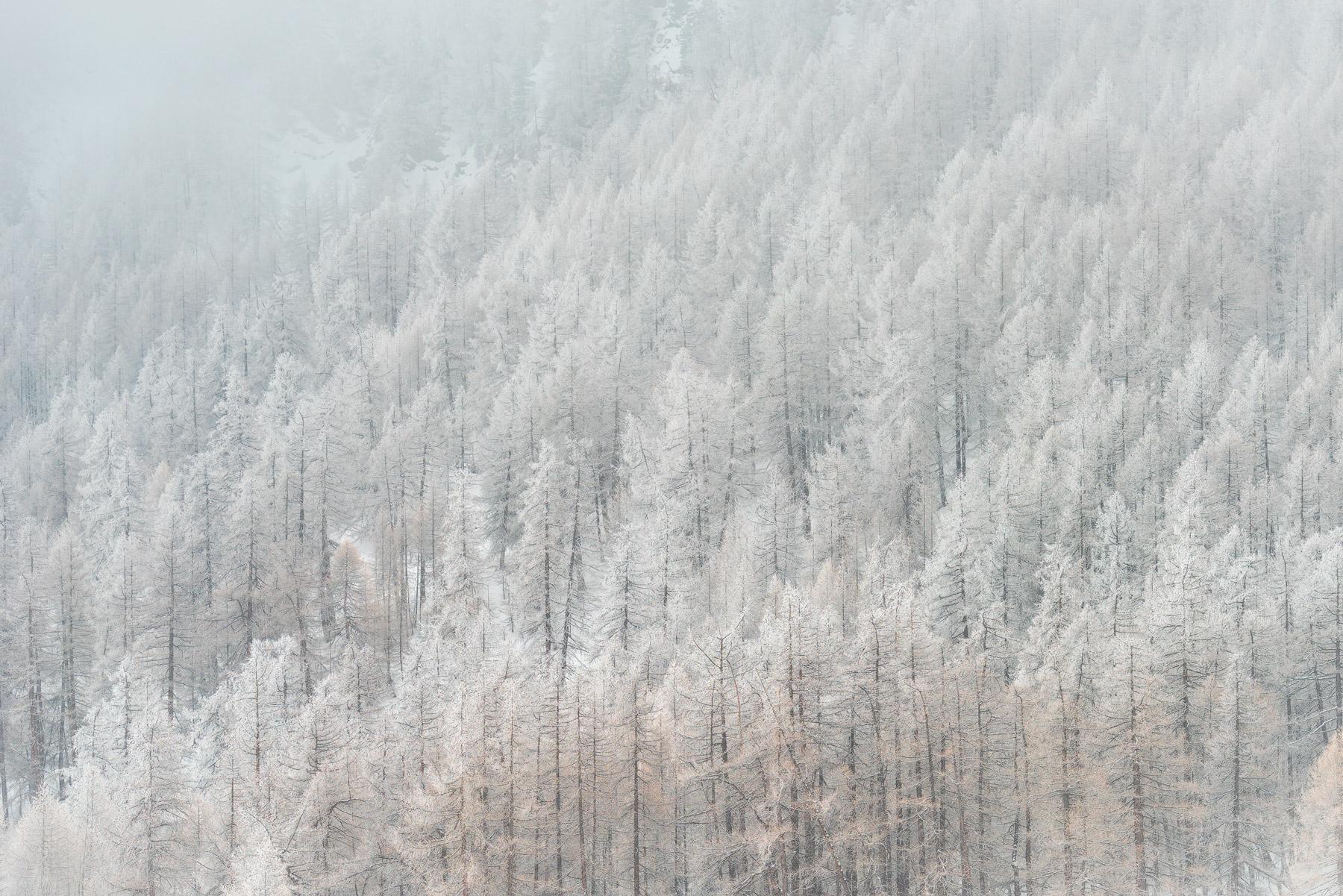 inverno-varaita-alberi